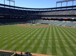 View from new CF seating area